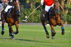 Horse Polo Player Use a Mallet. Selective Focus The Horse Polo Player Use a Mallet to Hit a Polo Ball During the match royalty free stock images