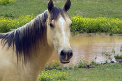 Horse by the pond Stock Images