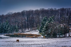 Horse and pond on a  farm in rural York County, Pennsylvania. Royalty Free Stock Images