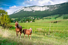 Horse and poney in French Alps Stock Photo