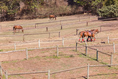 Horse Ponies Field Paddocks Royalty Free Stock Images
