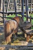 Horse pony Royalty Free Stock Image