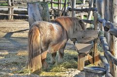 Horse pony shetland Stock Photos