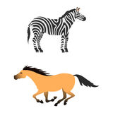 Horse pony stallion isolated different breeds color farm equestrian animal characters vector illustration. Royalty Free Stock Photography