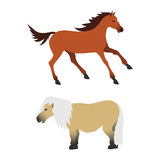 Horse pony stallion isolated different breeds color farm equestrian animal characters vector illustration. Royalty Free Stock Photo