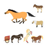 Horse pony stallion isolated different breeds color farm equestrian animal characters vector illustration. Stock Photography