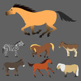 Horse pony stallion isolated different breeds color farm equestrian animal characters vector illustration. Stock Photos