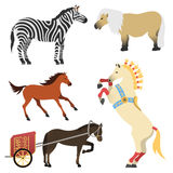 Horse pony stallion isolated different breeds color farm equestrian animal characters vector illustration. Stock Image