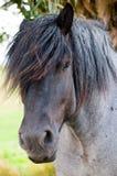 horse portrait 库存照片