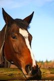 Horse portrait. Rich red sorrel quarter horse close-up portrait Royalty Free Stock Photos