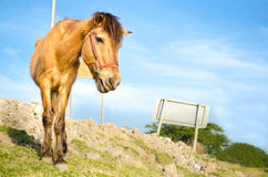 Horse portrait. With clear blue sky Stock Image