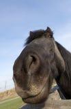 Horse portrait Stock Photography