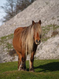 Horse portrait. In the mountains of the Basque Country Stock Image