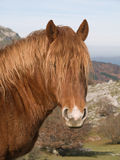Horse portrait. In the mountains of the Basque Country Royalty Free Stock Photos