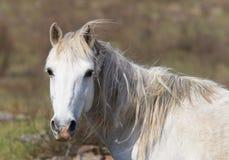 Horse portrait. Stock Photography