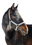 Horse portrait. Isolated over white Royalty Free Stock Photography