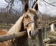 Horse portrait. Beautiful horse in old yard Stock Images