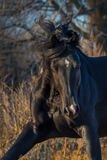 Horse portrait in autumn morning Royalty Free Stock Photography