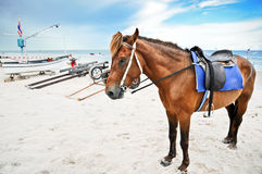 Horse portrait on the beach Stock Image