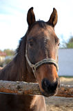 Horse portrait. Beautiful horse portrait in sunny day Stock Photos