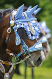 Horse portrait at catholic procession Stock Image