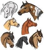 Horse Portrait Collection Stock Images