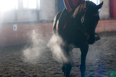 Horse portrait exhale in manege Royalty Free Stock Images