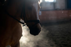 Horse portrait exhale in manege Stock Photo