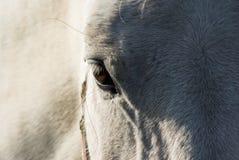 Horse portrait eye background. Horse's portrait with eye closeup, background Stock Images