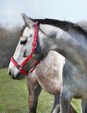Horse Portrait, Farm Stock Photo
