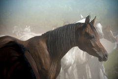 Horse portrait on a farm in summer Royalty Free Stock Photography