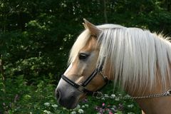 Horse portrait with flowers Royalty Free Stock Images