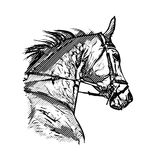 Horse portrait. Horse head on white background Stock Images