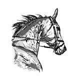 Horse portrait Stock Images