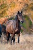 Horse portrait in herd Stock Photos