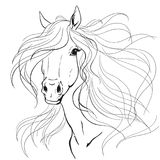Horse portrait. A horse`s mane. Black lines on a white background. Print vector Stock Photo