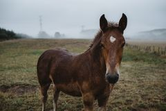 Horse portrait looking at the camera in foggy landscape royalty free stock photo