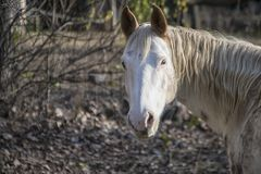 Horse, Portrait, Looking, Outdoors Stock Photo