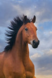 Horse portrait in motion Royalty Free Stock Images