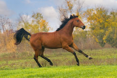 Horse portrait in motion Royalty Free Stock Photo