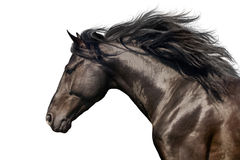 Horse portrait in motion Stock Photography