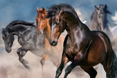 Horse portrait in motion. Horse portrait in herd in motion in desert dust Stock Photo