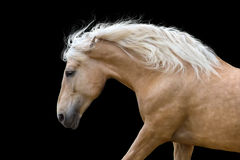 Horse portrait in motion Stock Photo