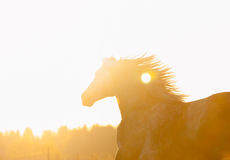 Horse portrait of moving horse filling with sunlight Royalty Free Stock Photo