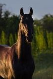 Horse portrait outdoor stock image