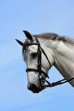 Horse portrait stock photo
