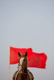Horse portrait  with a red Moroccan flag and clear sky Stock Image