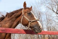 Horse portrait in spring Stock Photo