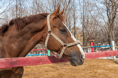 Horse portrait in spring Stock Images