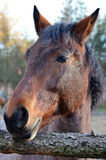 Horse portrait. In vertical orientation Royalty Free Stock Photography